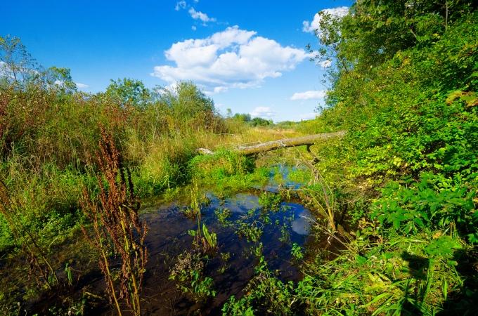 Stream & Wetland
