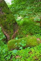 Mossy Tree and Rock