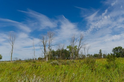 Wet Prairie