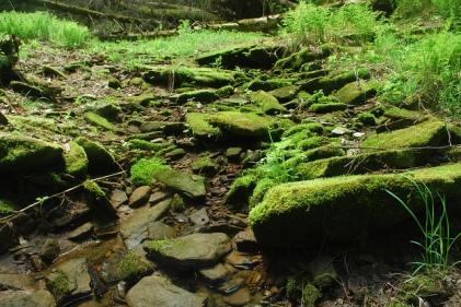 Gorge Floor