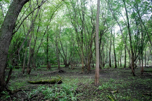 Lowland Forest