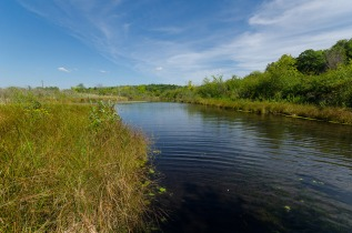 Bluff Creek