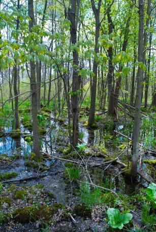 Lowland Hardwood Forest