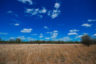Dry Prairie / Barrens