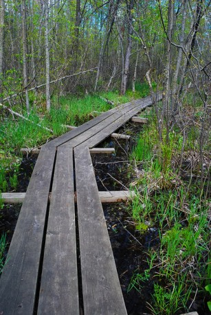 Boardwalk through Bog