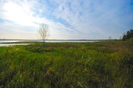 Mud Lake & Sedge Meadow