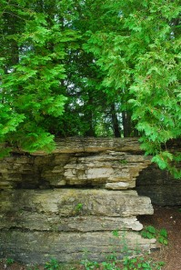 Forest on Outcropping