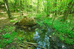 Ephemeral Wet Spot