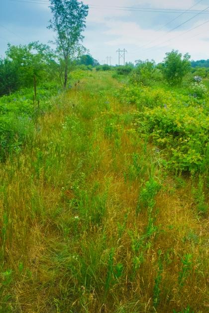 Kessler Railroad Prairie Wisconsin State Natural Area #199 Rock County