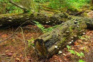 Log Life