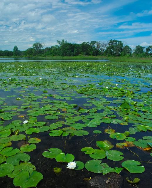 Lake Ennis