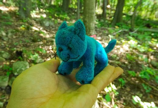 Wild Blue Whatchamacallit