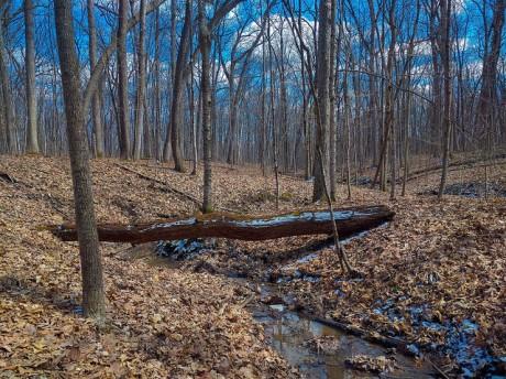 Forest & Stream