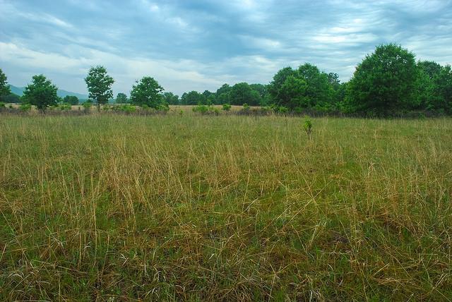Dry Prairie