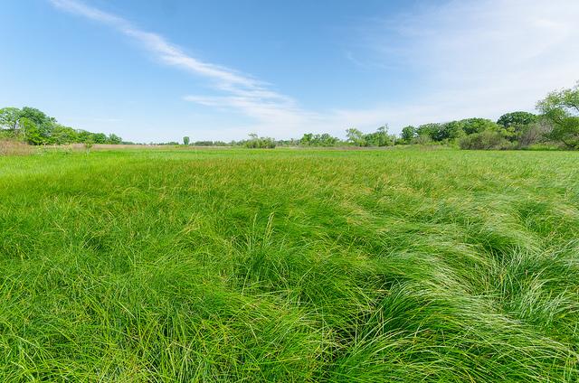 Sedge Meadow / Fen