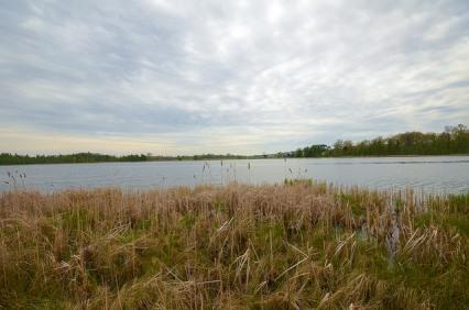 Bass Lake Fen