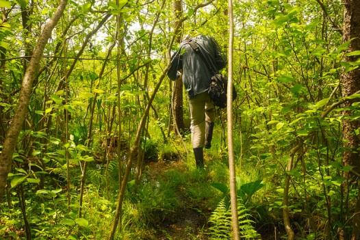 Bog Walking