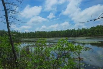 Bog Lake