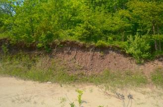 Bluff Profile