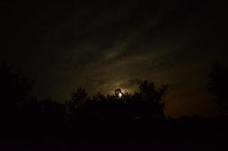 Bats at Night