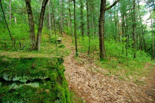 Green Trail