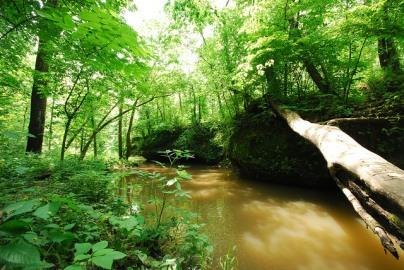 Water & Woods